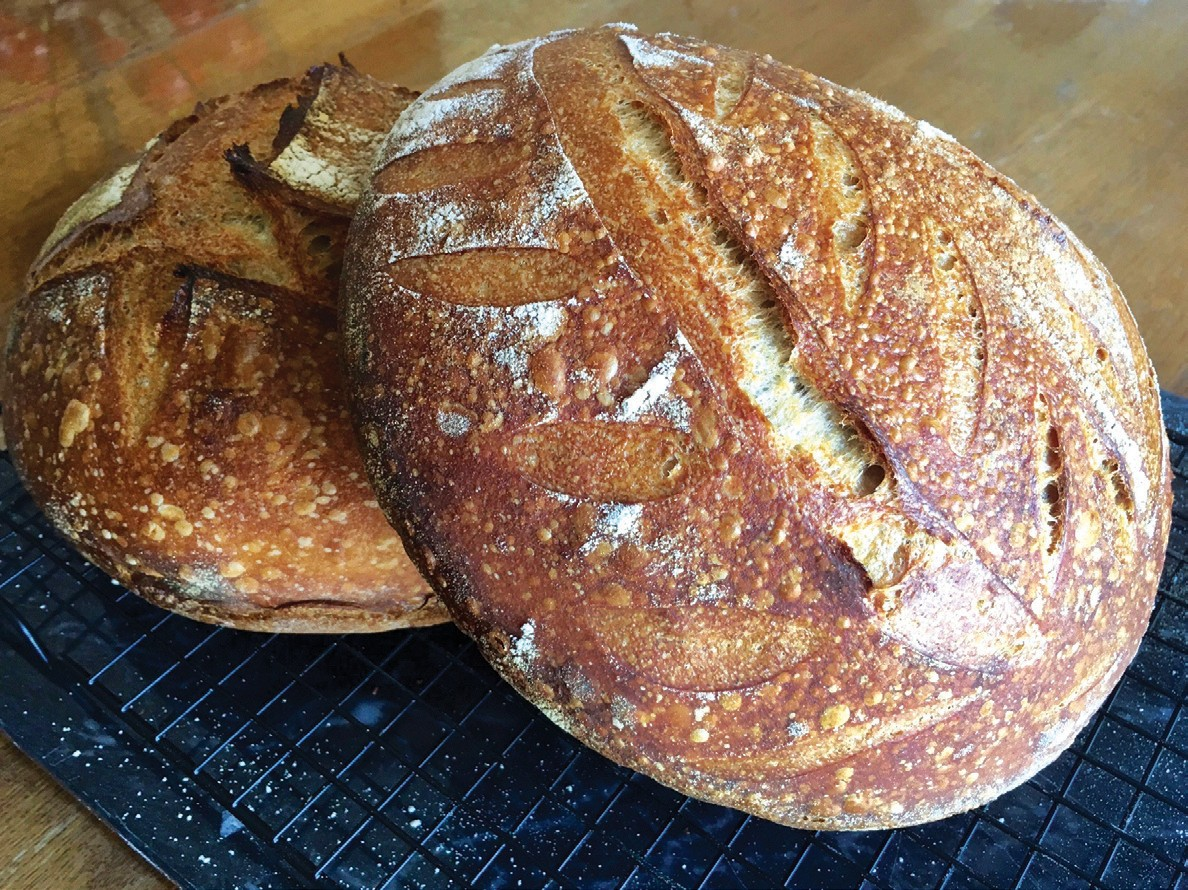 PLENTY OF DOUGH—Two 900-gram loaves of basic sourdough bread, made with a tinge of whole wheat. DARLEEN PRINCIPE/Special to The Acorn