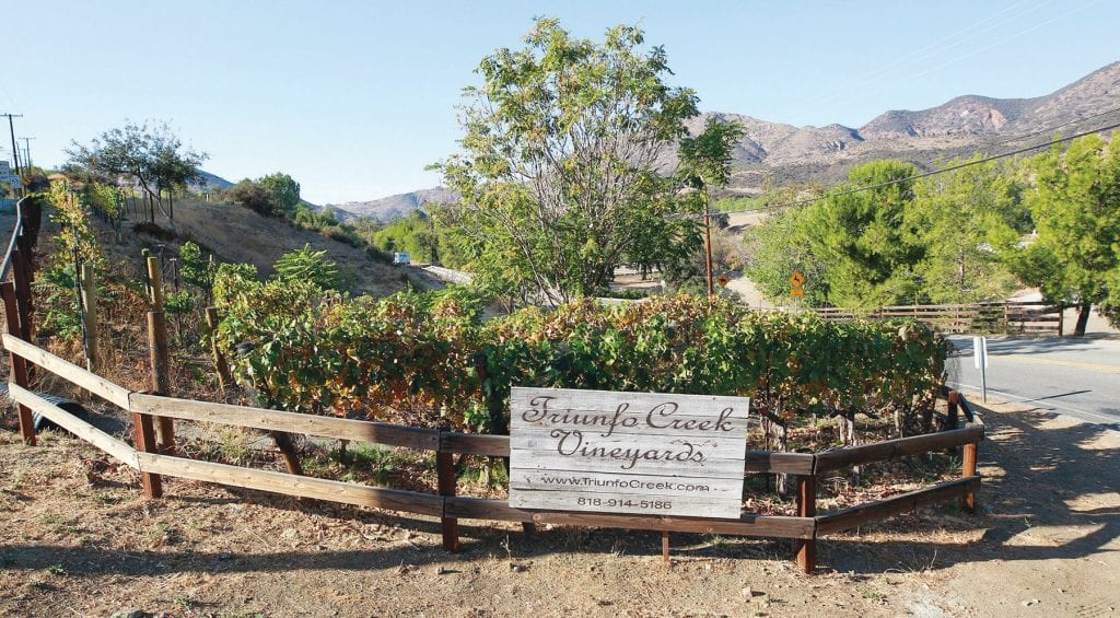 DESTINATION—Triunfo Creek Vineyards is one of two venues being targeted by neighbors who are annoyed. RICHARD GILLARD/Acorn Newspapers
