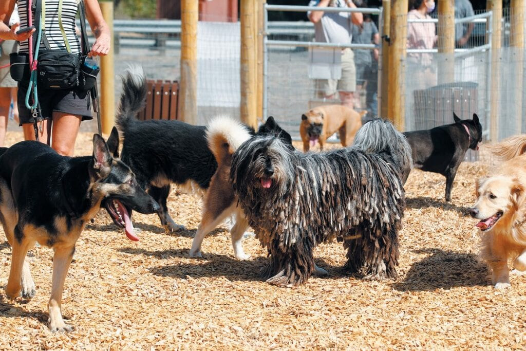 POOCH PLAY—Dogs explore and play inside the temporary dog park at Wild Walnut Park during the opening on Sept. 4 RICHARD GILLARD/Acorn Newspapers